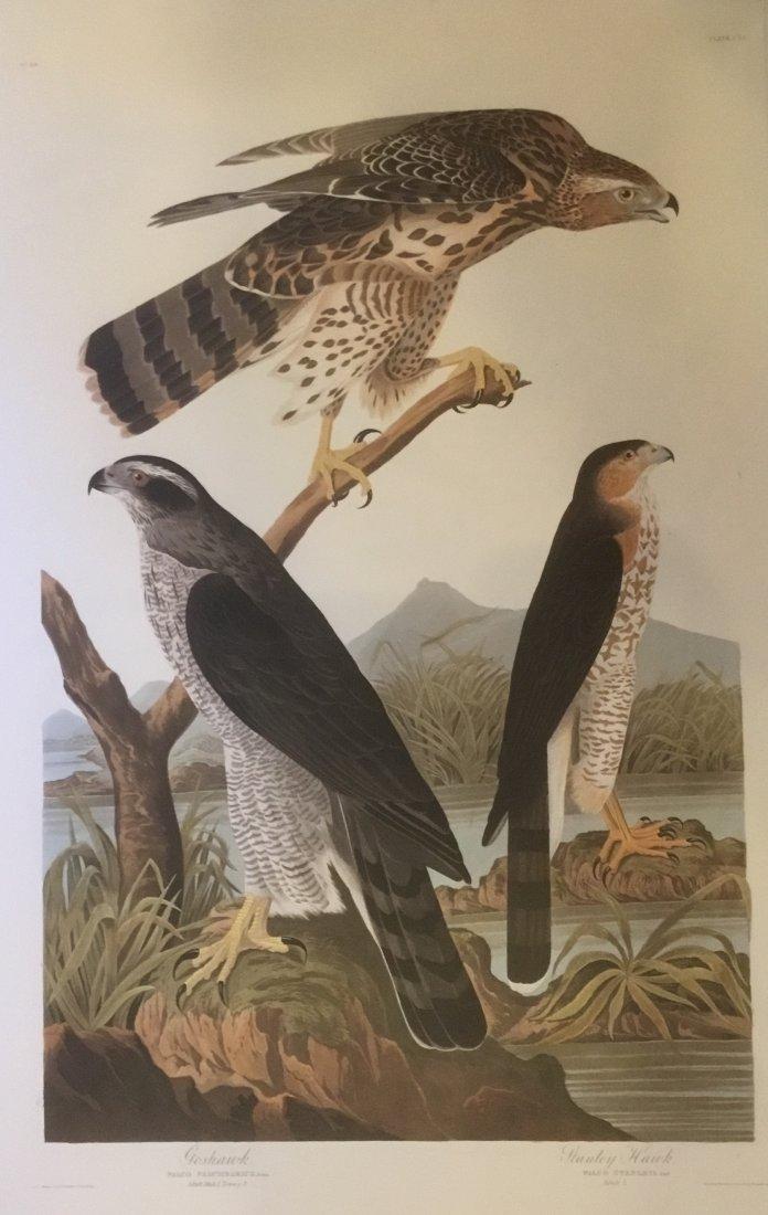 John James Audubon: Goshawk, Stanly Hawk, 185