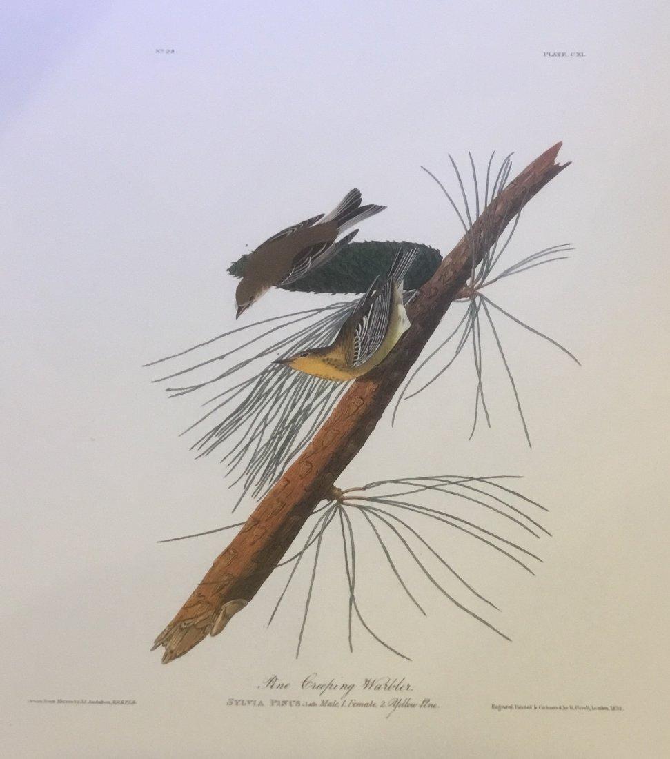 John James Audubon: Pine Creeping Warbler, 1985