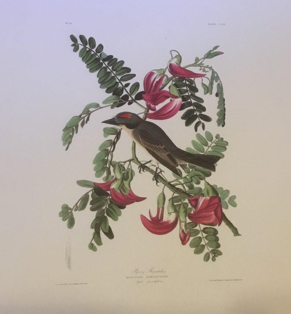 John James Audubon: Pipity Flycatcher, 1985