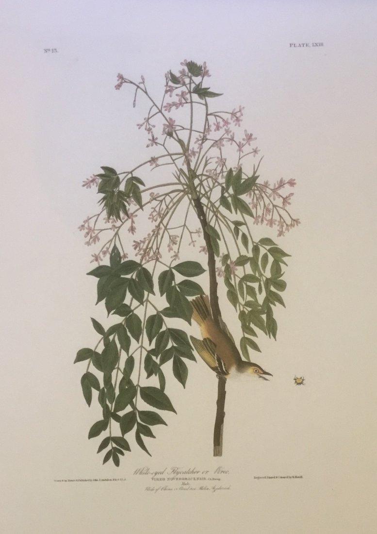 John James Audubon: White-eyed Flycatcher or Vireo, 195