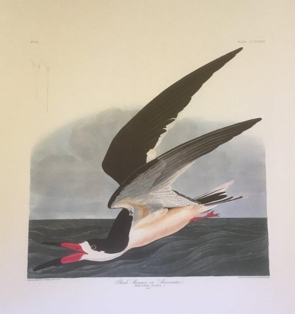 John James Audubon: Black Skimmer or Shearwater, 1985