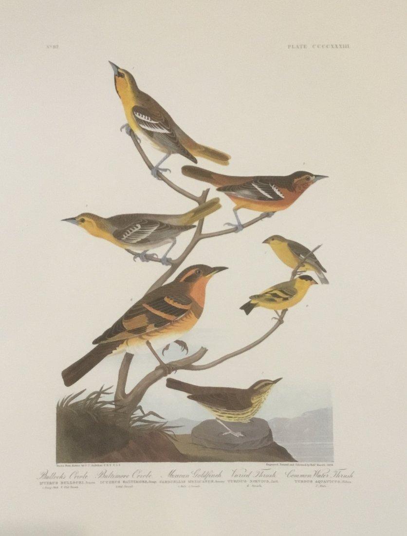 John James Audubon: Bullock's Oriole, Plate CCCCXXXIII