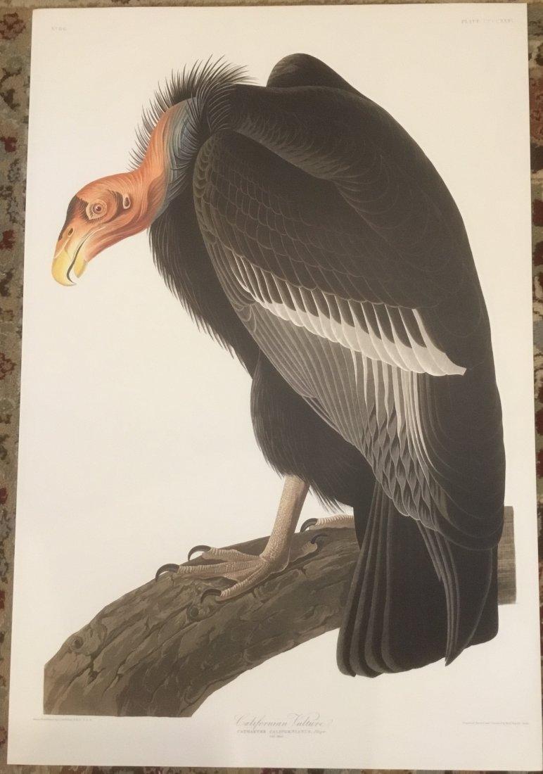 John James Audubon: Californian Vulture