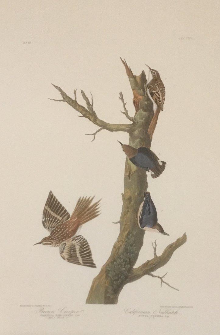 John James Audubon: Brown Creeper, Californian Nuthatch