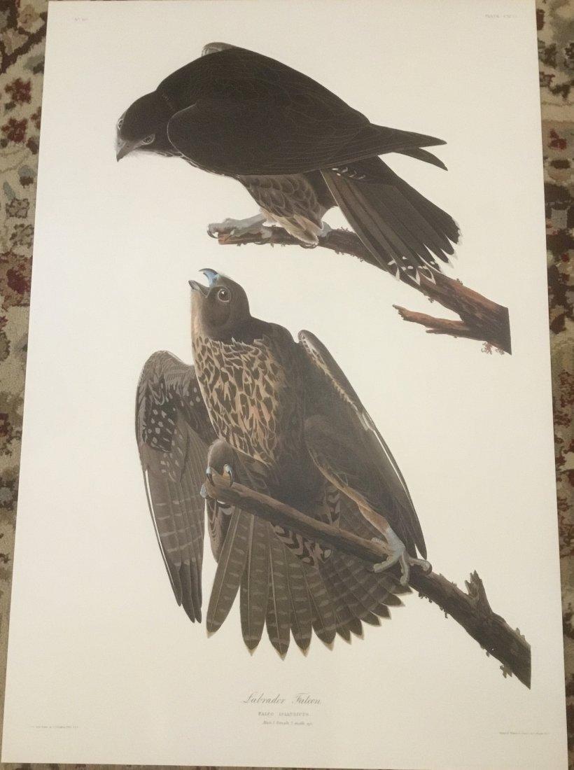 John James Audubon: Labrador Falcon, Plate CXCVI