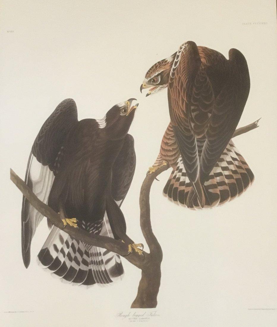 John James Audubon: Rough-legged Falcon, Plate CCCCXXII