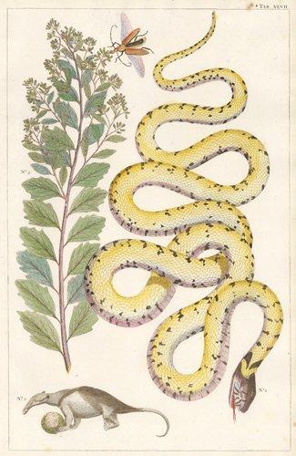 Albertus Seba: Grass Snake and Aardvark, 1734