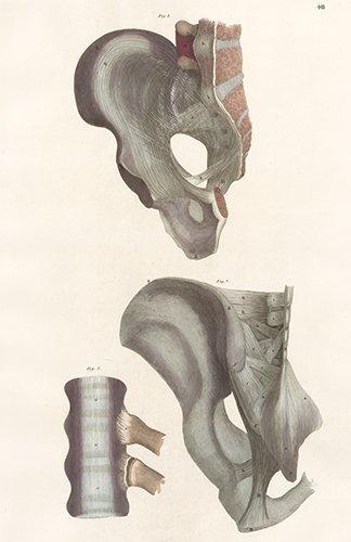 John Lizars: Pelvis. Anatomical Plates, 1822