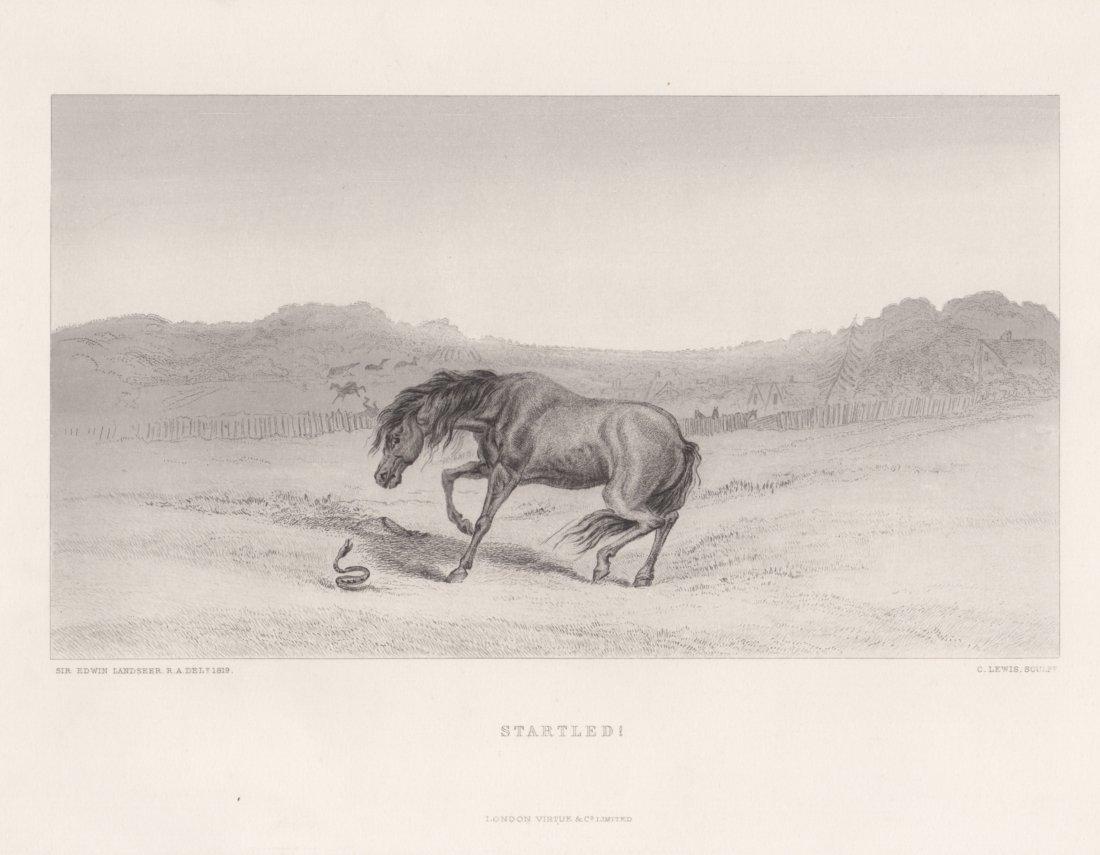 Edwin Landseer: Startled!, 1875