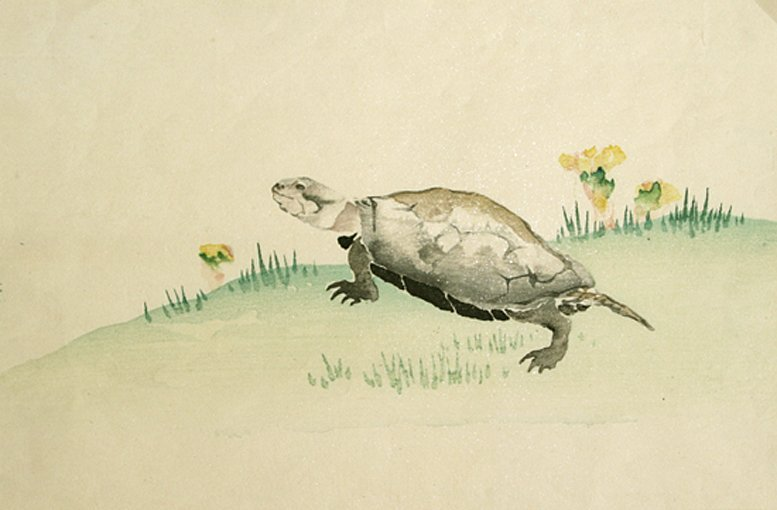 Kacho-e Tortoise, 1910