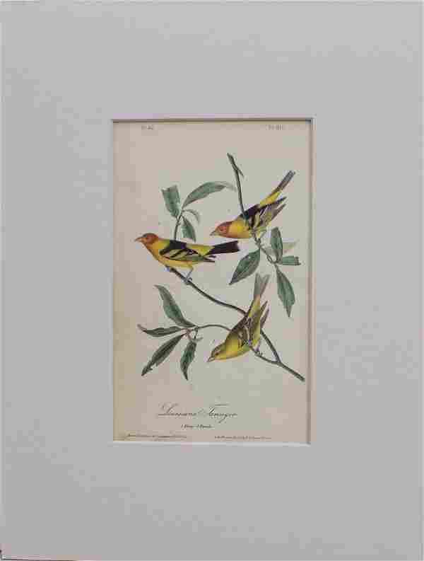 John James Audubon: Louisiana Tanager, 1st Ed 1840
