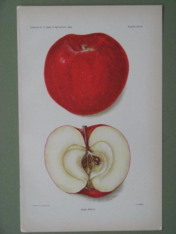 Bertha Heiges:Akin Apple, 1903