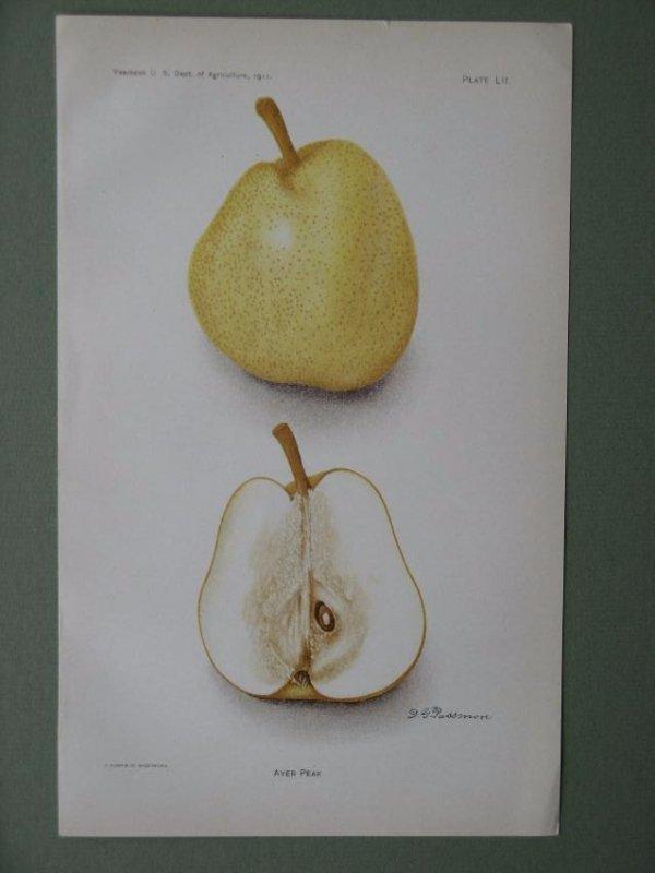 Deborah Passmore: Ayer Pear, 1911