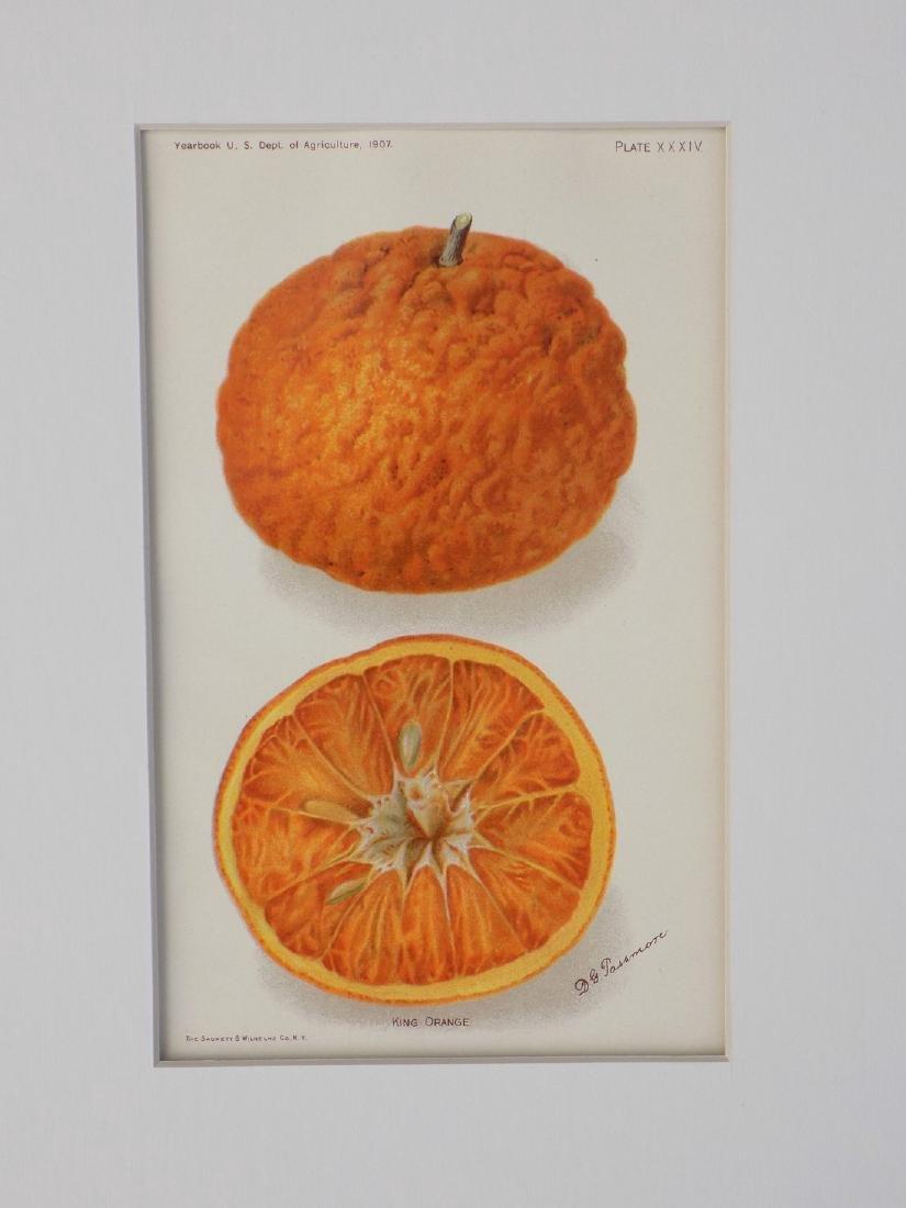 D. G. Passmore: King Orange, 1907