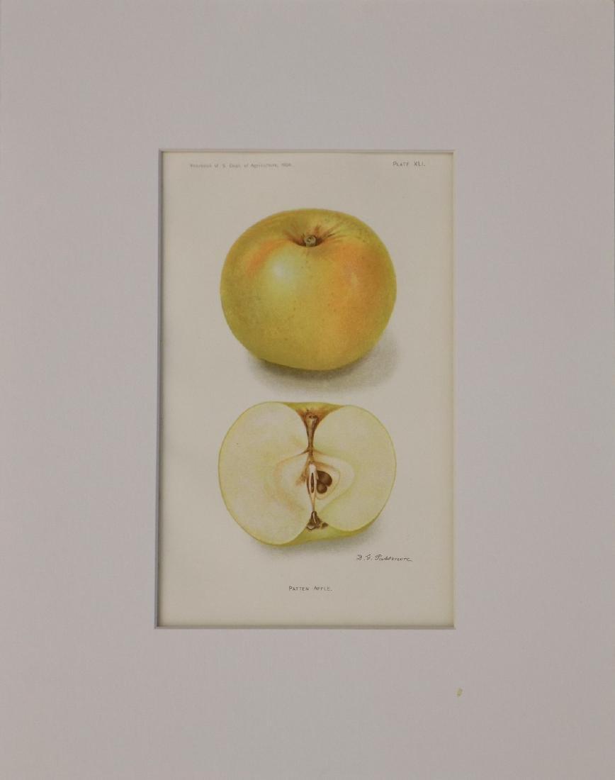 D. G. Passmore: Patten Apple, 1908