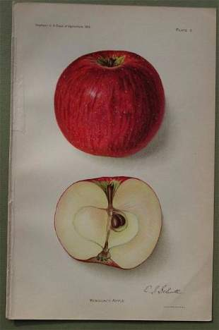 Monocacy Apple