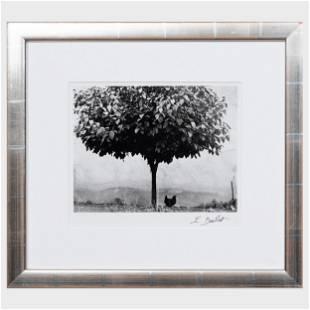 Edouard Boubat (1923-1999): Poulet et arbre, France
