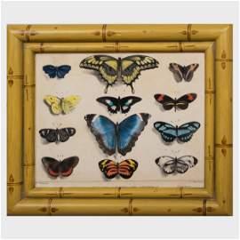 Fran�ois le Villain (active 1820-1830): Les Papillons: