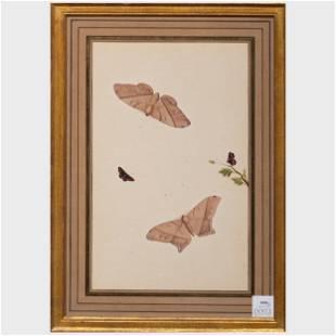 European School: Butterflies: A Pair