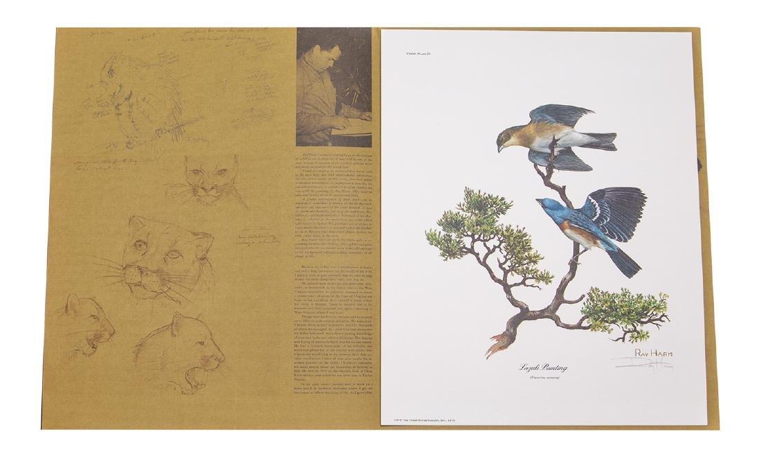 Ray Harm Wildlife Artist Print (Lazuli Bunting Signed)