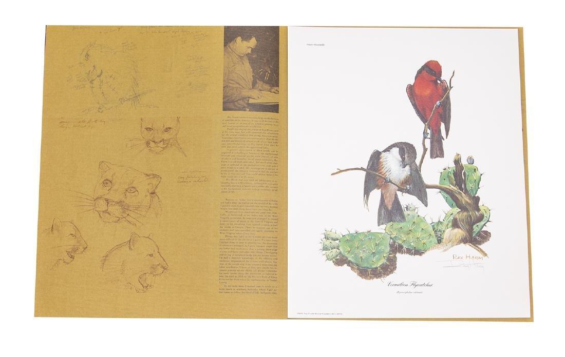 Ray Harm Wildlife Artist Print (Vermilion Flycatcher