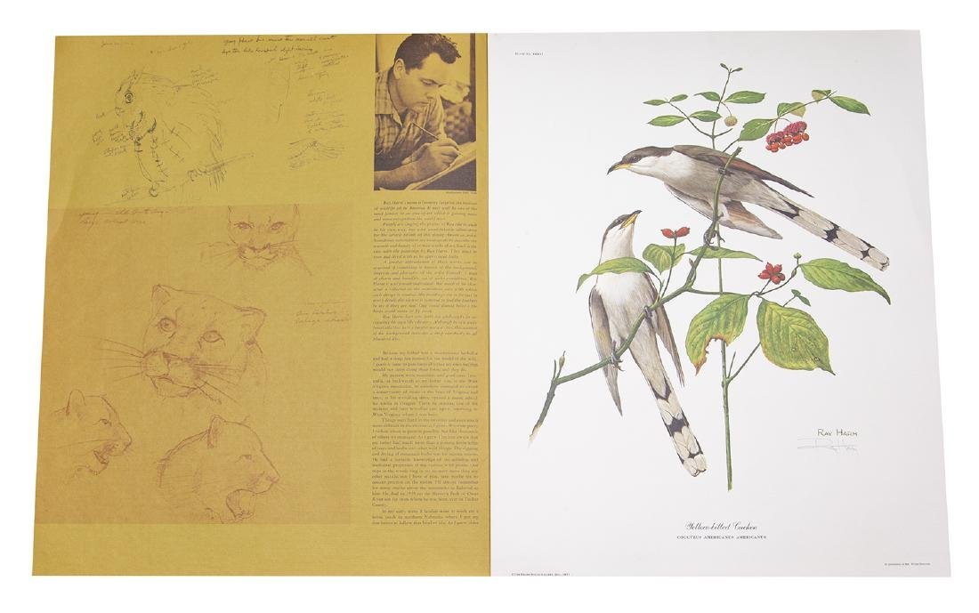 Ray Harm Wildlife Artist Print (Yellow-billed Cuckoo