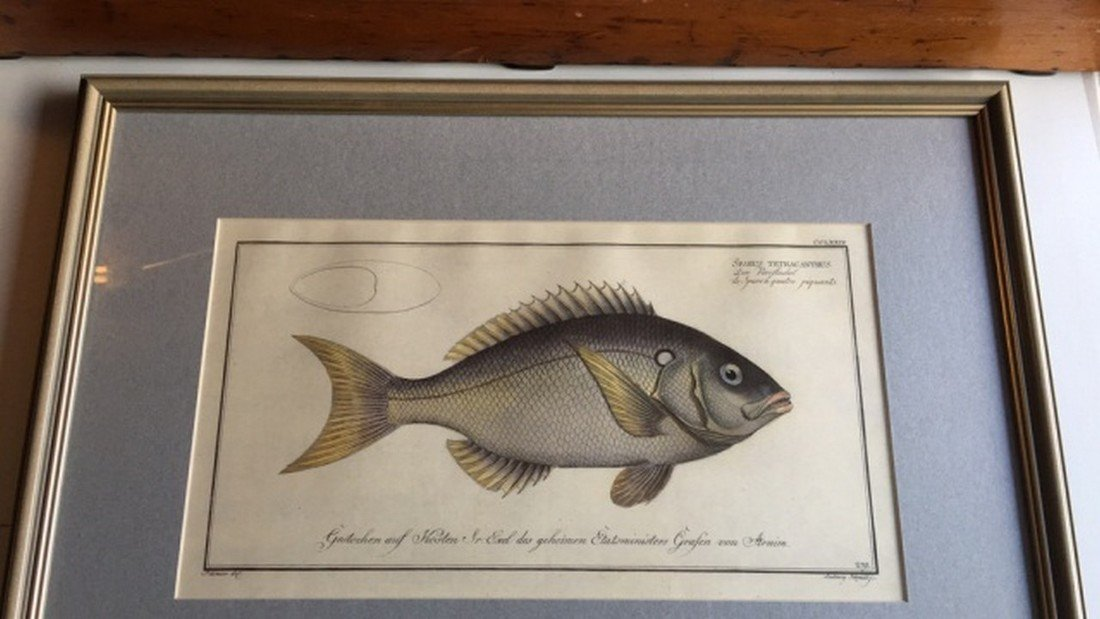 Antique Hand Colored Print of Fish