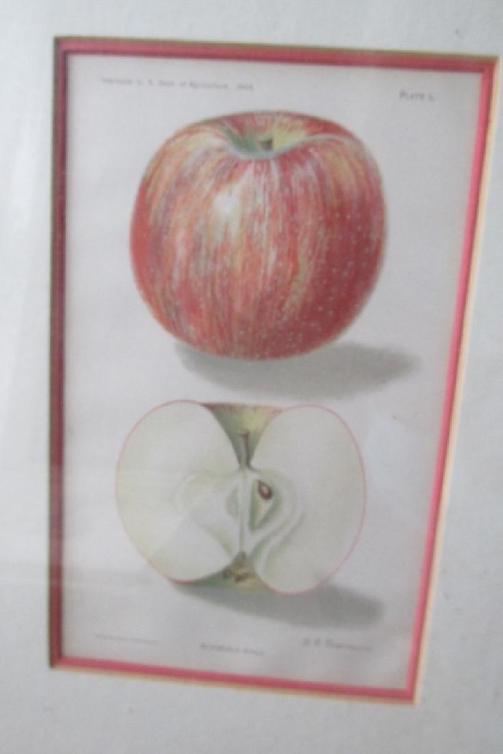 Bloomfield Apple