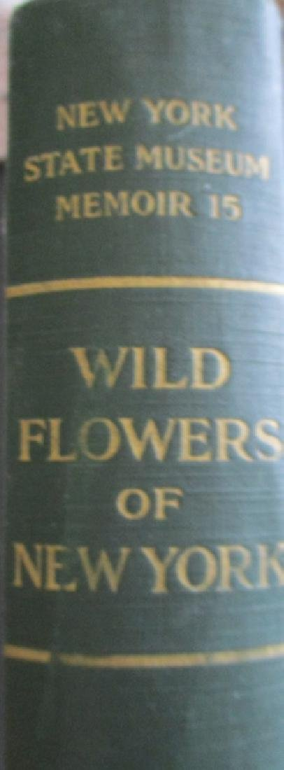 Wild Flowers of New York