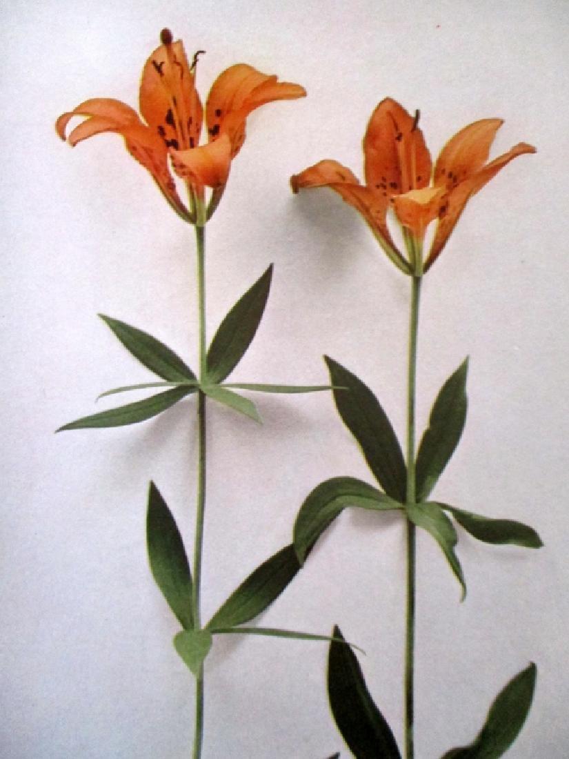 Wild Flowers of New York - 6