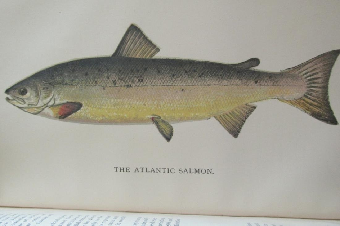 Pennsylvania Fisheries 1895 - 4