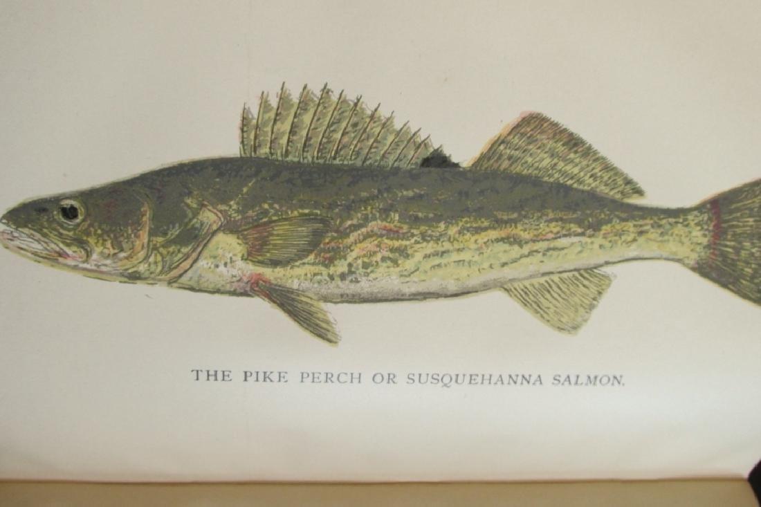 Pennsylvania Fisheries 1895 - 6