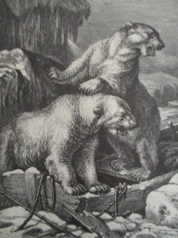 Polar Bear - 19th Century Wood Engraving