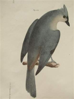 John William Hill (American, 1812?1879)  Birds