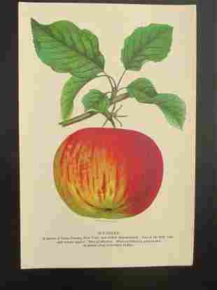 Wagener Apples - Stecher Lithograph Company