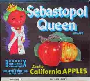 Sebastopol Queen Apples  - California Advertising