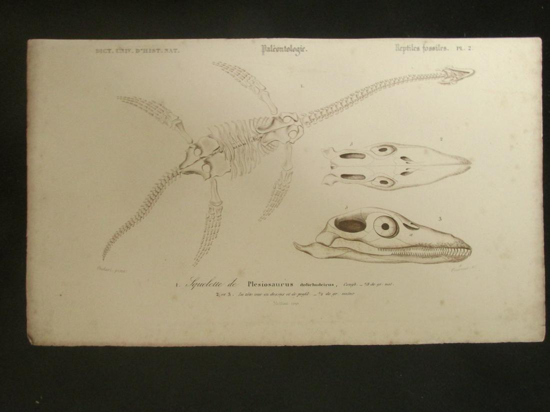 Paleontology - Plesiosaurus