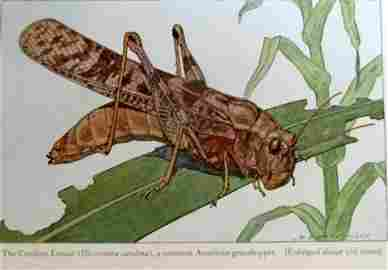 Insects - Their Ways and Means of Living