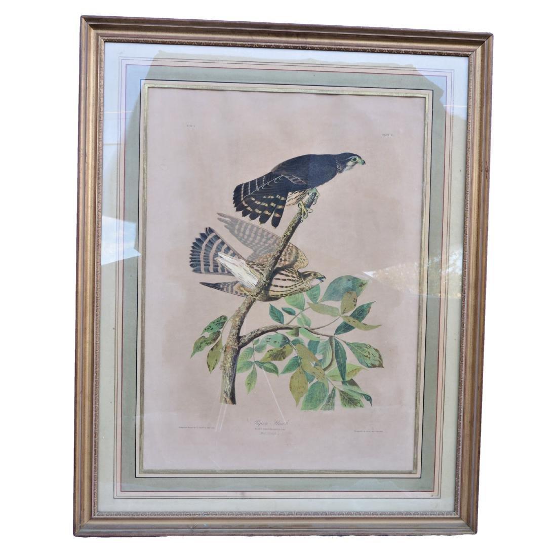 Antique Audubon Pigeon Hawk Plate 21 #11-3