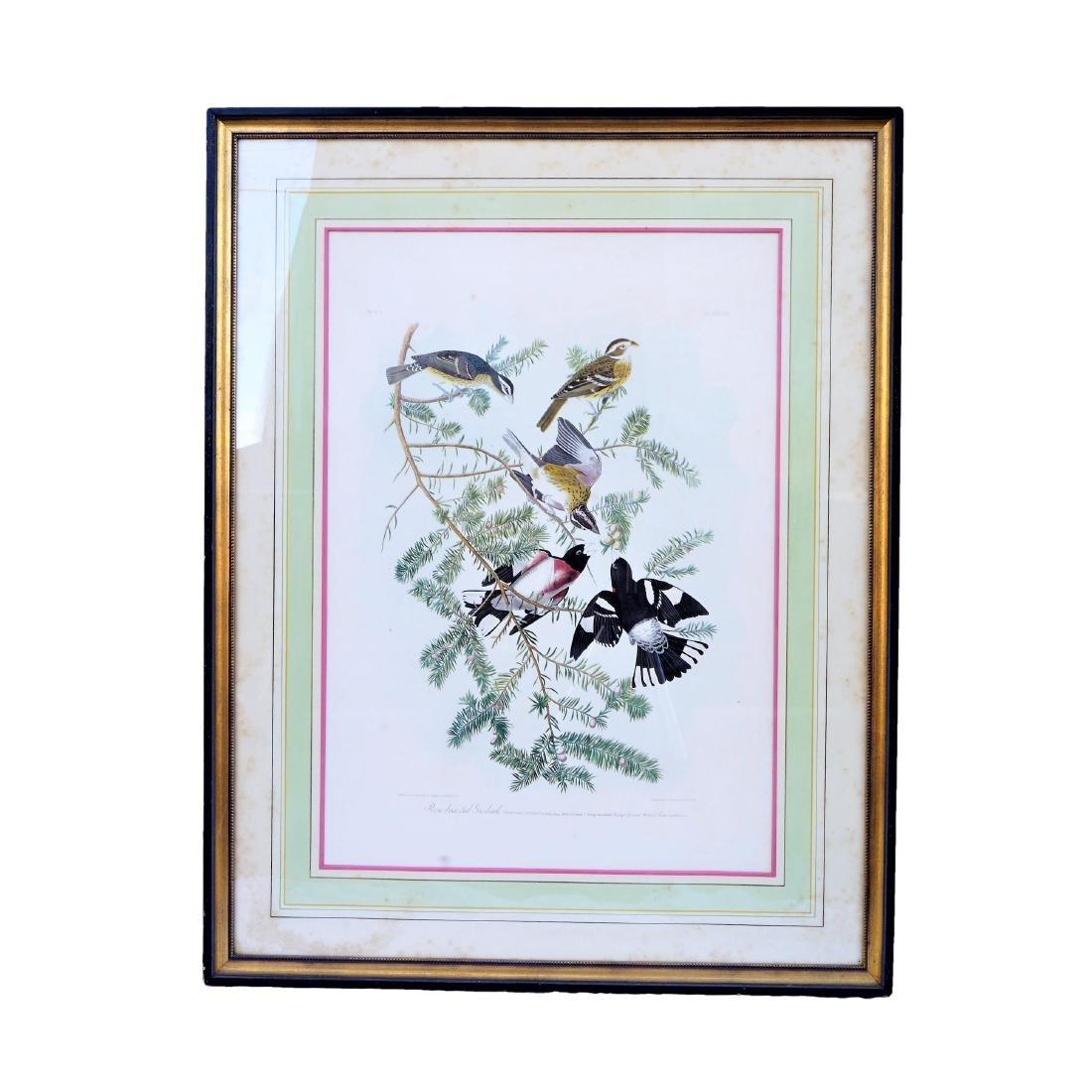 Antique Audubon Rose Breasted Grosbeaks Plate 205 #3_3