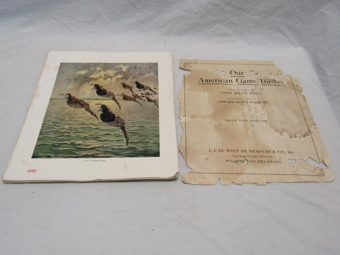 1917 Dupont Our American Game Birds Prints