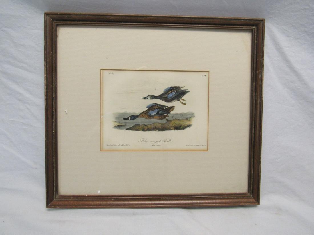 J. J. Audubon Lithograph of Blue Wing Teale