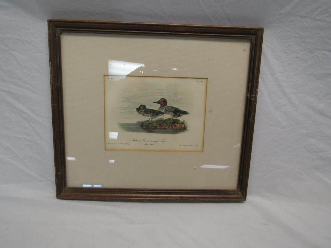 J. J. Audubon Lithograph of American Green Winged Teale