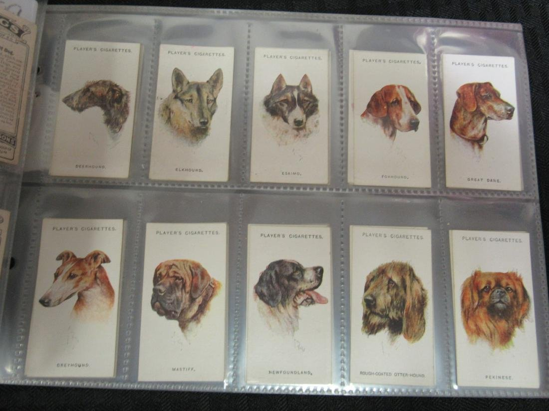 Set of 50 1929 Dogs Cigarette Cards - 2