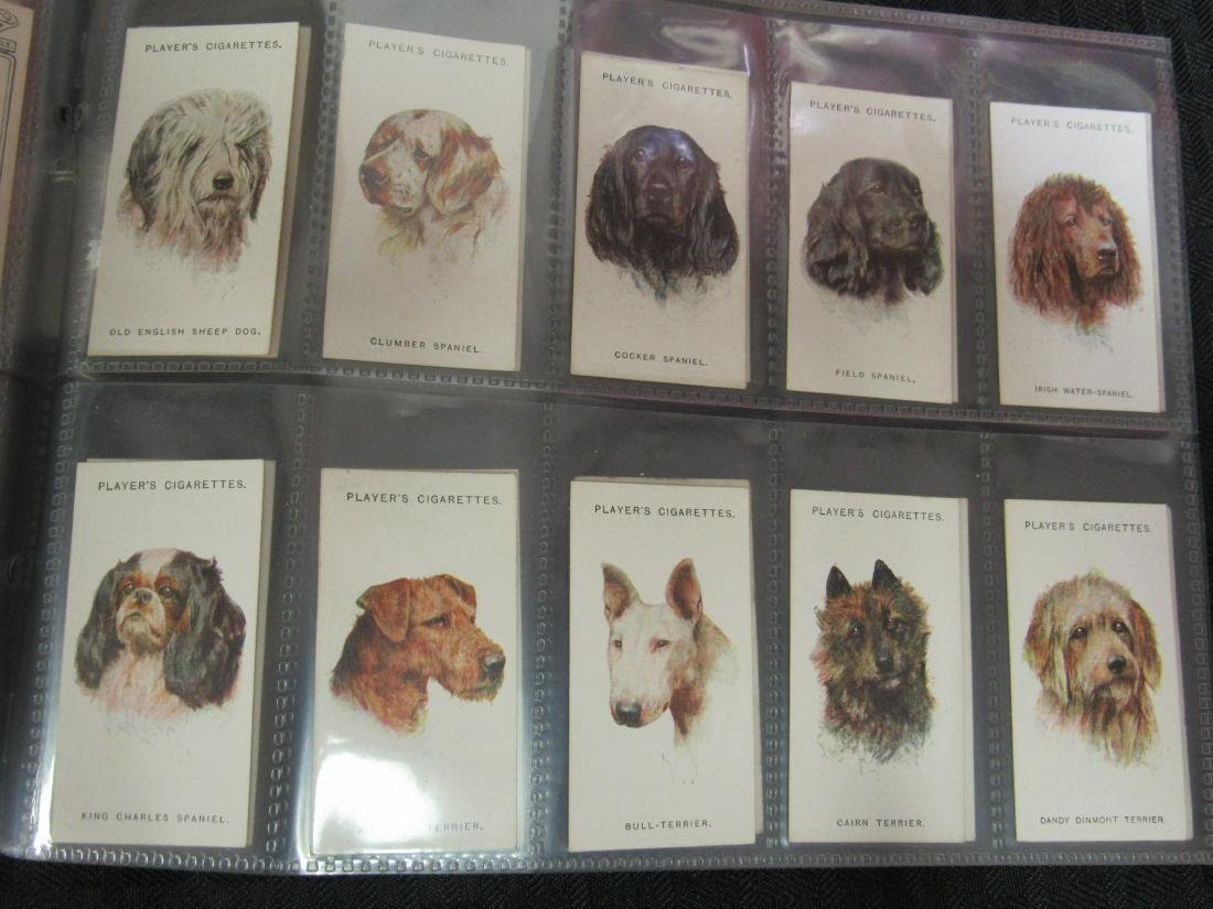 Set of 50 1929 Dogs Cigarette Cards - 4