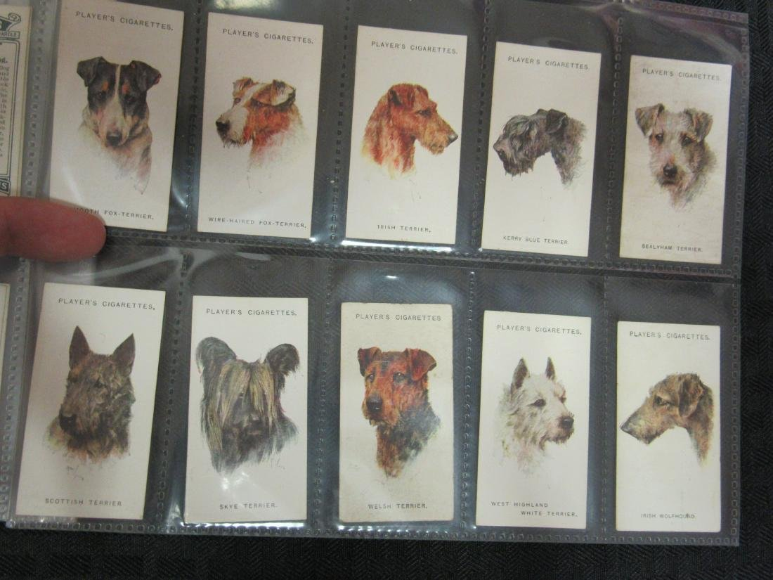 Set of 50 1929 Dogs Cigarette Cards - 5