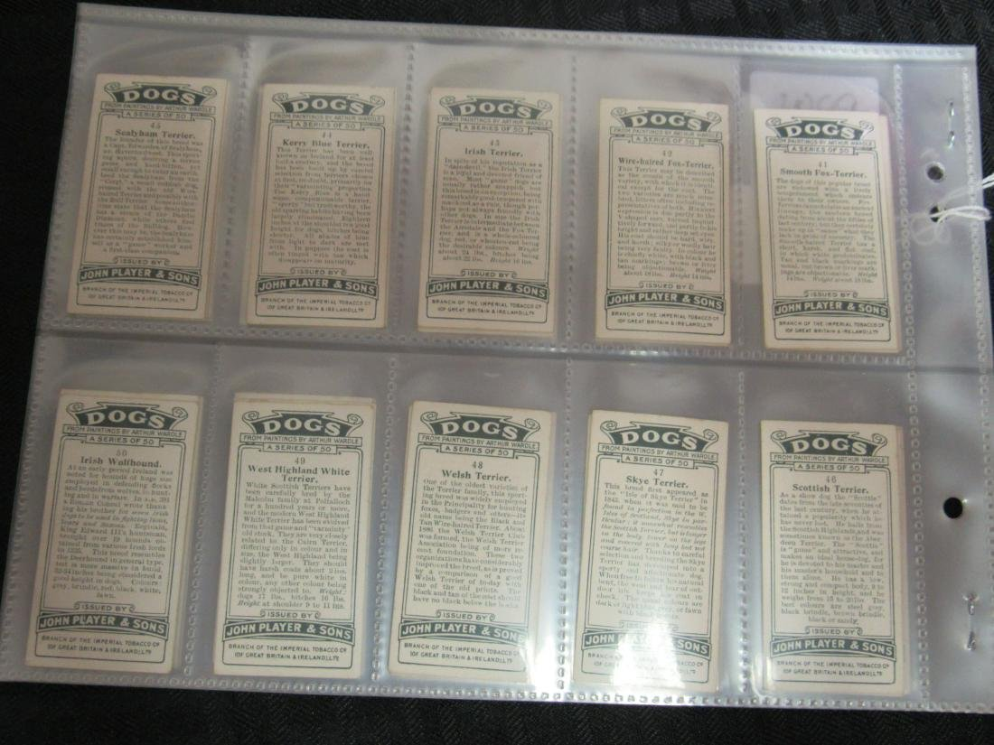Set of 50 1929 Dogs Cigarette Cards - 6