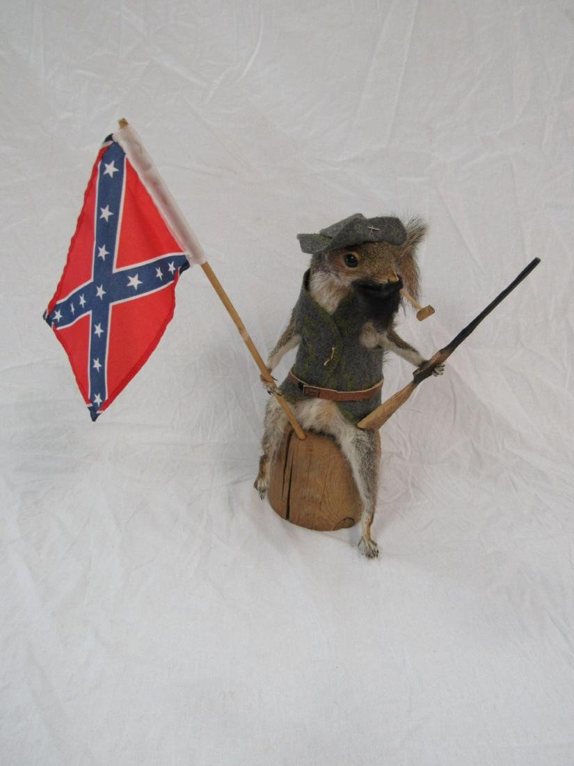 Taxidermy Confederate Squirrel