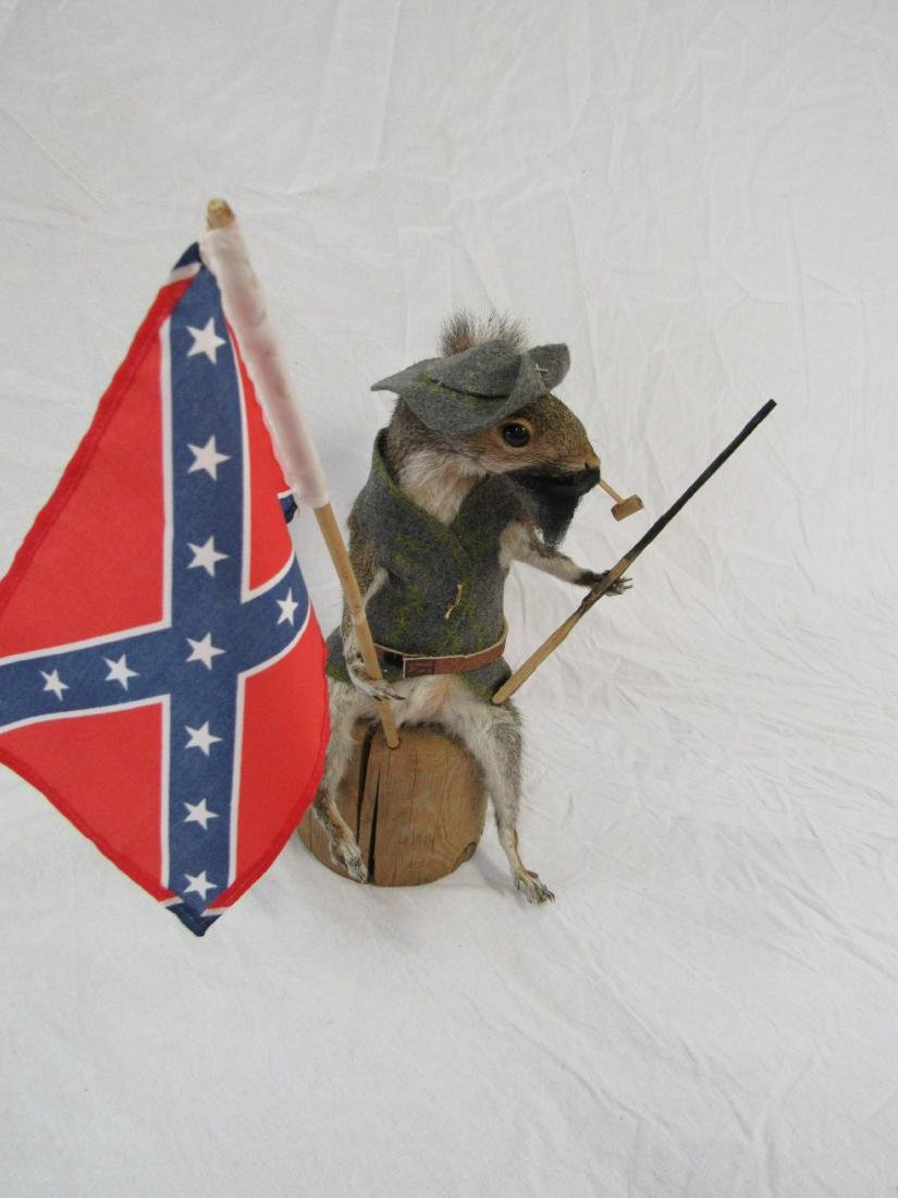 Taxidermy Confederate Squirrel - 3