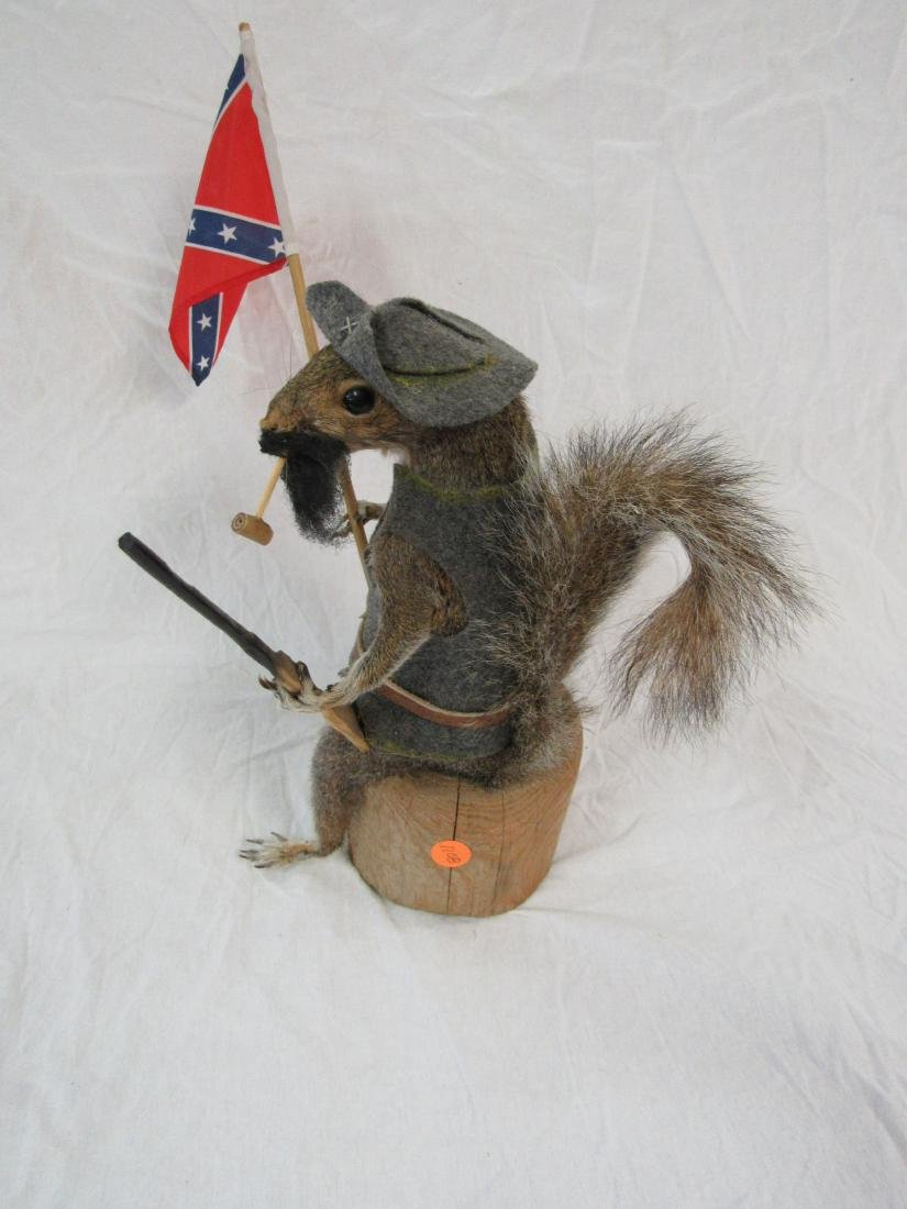Taxidermy Confederate Squirrel - 4